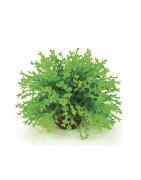 Plastové rostliny do akvária a terária