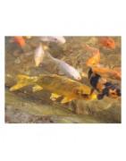 Univerzální krmivo pro ryby v jezírku